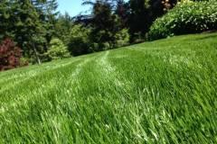 Lush-Grass-2