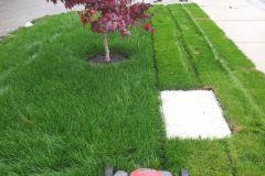 Mow-lush-lawn