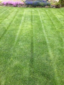 Is your Lawn in good Shape?