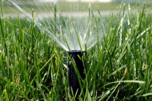 Watering is CRUCIAL to the seed germination. The seed cannot be allowed to dry out. Depending on the time of year, we recommend 4-6 times a day for 5-7min at a time.