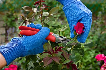 pruning plants helps keep them healthy
